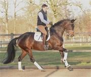 Hest til salg - Paula