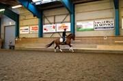 Hest til salg - SACHMANNS ERAGON