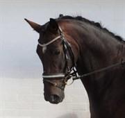 Hest til salg - TOTH'S LITTLEDOO