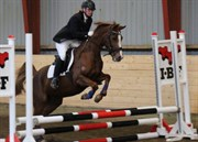 Hest til salg - NØRRETELLING'S MANIFIQUE
