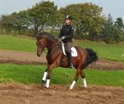 Hest til salg - Lamour