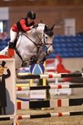 Hest til salg - CASINO´S SON L