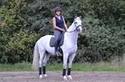 Hest til salg - CAROL