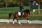 Hest til salg - AMARILLA