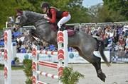 Hest til salg - BRIDGEWATER OPIUM