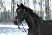 Hest til salg - LØGTHOLT'S BASTIAN