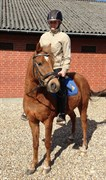 Hest til salg - LINUS