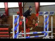 Hest til salg - La Fayette