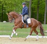 Hest til salg - Achak