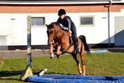 Hest til salg - STIDSBJERGS PONCHO
