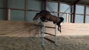 Hest til salg - Enghøjs Duchess