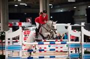 Hest til salg - STALD P.R. BISSE