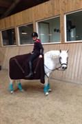 Hest til salg - LINDVEDS HESPER