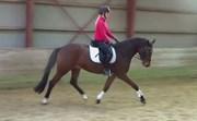Hest til salg - San Miguel