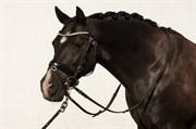 Hest til salg - Branddammen's Tabasco