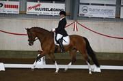 Hest til salg - HEDEGÅRDENS LANZETTA