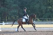 Hest til salg - WINDOR VOM GWICK