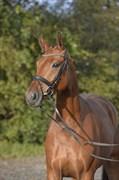 Hest til salg - LAOLA