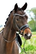 Hest til salg - SKIKKILD'S DIVANA