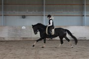 Hest til salg - MØENSHOLMS PRIMADONNA