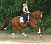 Hest til salg - O.K.
