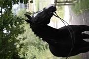 Hest til salg - HOT STEP