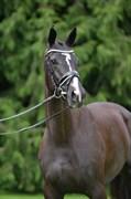 Hest til salg - TANKEDALS KATARA