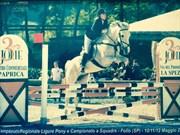 Hest til salg - lady jump