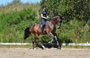 Hest til salg - RAMIR