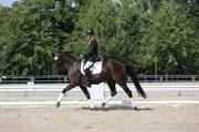 Hest til salg - SAN SOUCI