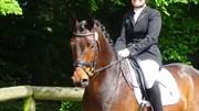 Hest til salg - SHAMROCK N