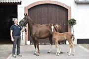 Hest til salg - FÜRSTIN