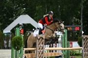 Hest til salg - STEENDIEKS DARCO