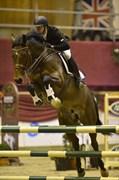 Hest til salg - RAYPAWERS ZUNWAY