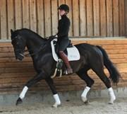 Hest til salg - WILD WILLY GRANLY
