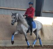 Hest til salg - Flamenquito CY
