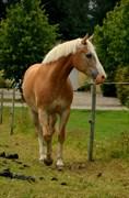 Hest til salg - Tara