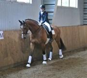 Hest til salg - Mejlkærs La Cour Cornett