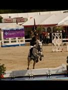 Hest til salg - BALLYCURRAGHAN COOSHEEN BOY