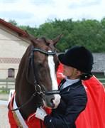 Hest til salg - NARCO VAN DE BEEKERHEIDE