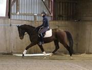 Hest til salg - LIMPOPO V