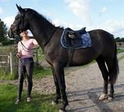 Hest til salg - OSAGERS TIRAVEL