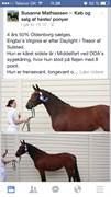 Hest til salg - ENGBO'S VIRGINIA