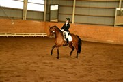 Hest til salg - PRÆSTEMARKENS ROSELEE