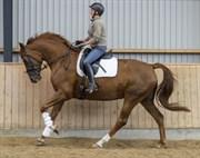 Hest til salg - RAFAELLY