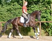 Hest til salg - FLEUR