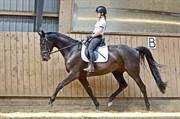 Hest til salg - SKIKKILDS CHAMEUR NOIR