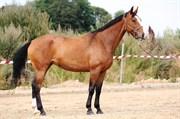 Hest til salg - FAIR TITI