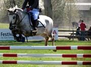 Hest til salg - BULLER