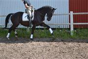 Hest til salg - EMINENT